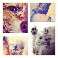 Das Foto wurde bei Cats&Dogs von Yanita am 2/26/2012 aufgenommen