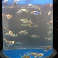 9/3/2012 tarihinde Evan L.ziyaretçi tarafından Texas State Aquarium'de çekilen fotoğraf