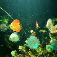 Foto tomada en Underwater World por KELVIN L. el 2/21/2012