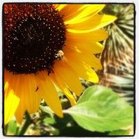 Foto tirada no(a) Denver Botanic Gardens por Brandon A. em 7/26/2012