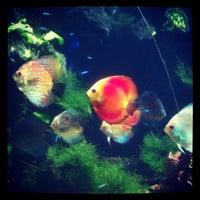 Foto tomada en Underwater World por Cat D. el 9/1/2012