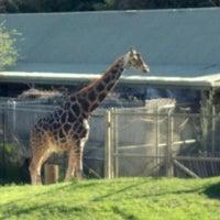 3/4/2012에 David E.님이 Cameron Park Zoo에서 찍은 사진