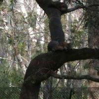 Image added by Valerie S at Red Fox Exhibit @ Brookgreen Garden Zoo