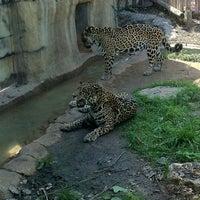 4/1/2012에 Alex B.님이 Cameron Park Zoo에서 찍은 사진