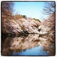 4/6/2012にchuoushibafuが井の頭恩賜公園で撮った写真