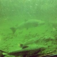 Foto scattata a Hiram M. Chittenden Locks da Stephanie C. il 8/23/2012