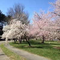 Снимок сделан в Arnold Arboretum пользователем Allison L. 3/27/2012