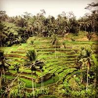 Снимок сделан в Tegallalang Rice Terraces пользователем Adam J. 9/5/2012