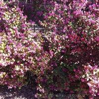 2/16/2012にDavid A.がDescanso Gardensで撮った写真