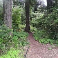 Снимок сделан в San Francisco Botanical Garden пользователем NinjaNeuro 7/28/2012