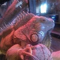 Foto diambil di Winking Lizard Tavern oleh Dawn G. pada 5/11/2012