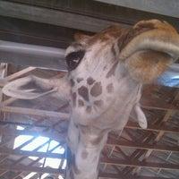 Снимок сделан в Houston Zoo пользователем She _. 6/24/2012