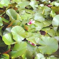 Foto scattata a Jardins de Joan Brossa da Lluis G. il 5/28/2012