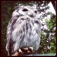 รูปภาพถ่ายที่ Zoo Berlin โดย Christian B. เมื่อ 8/10/2012