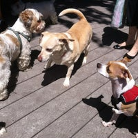 6/3/2012 tarihinde Siobhan Q.ziyaretçi tarafından Tompkins Square Park Dog Run'de çekilen fotoğraf