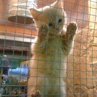 Das Foto wurde bei Cats & Dogs von Александр Н. am 2/25/2012 aufgenommen