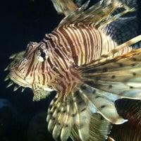 Foto tomada en Oklahoma Aquarium por Shauna W. el 6/17/2012