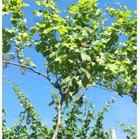 Das Foto wurde bei Hawk Haven Winery von Lynsie P. am 6/21/2012 aufgenommen