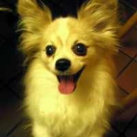 Das Foto wurde bei Bulger Veterinary Hospital von Bessie K. am 6/2/2012 aufgenommen