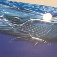 รูปภาพถ่ายที่ Blue Whale โดย Martin F. เมื่อ 3/18/2012
