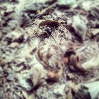 9/2/2012にDelano B.がBarton Creek Greenbeltで撮った写真