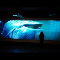 Снимок сделан в Museo Nacional de Historia Natural пользователем Felipe U. 8/4/2012