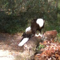 Image added by Valerie S at Bald Eagle Exhibit @ Brookgreen Garden Zoo