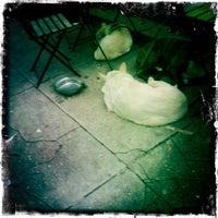 Foto scattata a Green Line Cafe da Karen H. il 2/16/2012