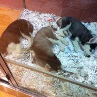 Pets - Melbourne CBD - Melbourne Central, 211 La Trobe St