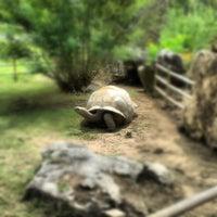 Foto tomada en Tulsa Zoo por Jory C. el 8/14/2012
