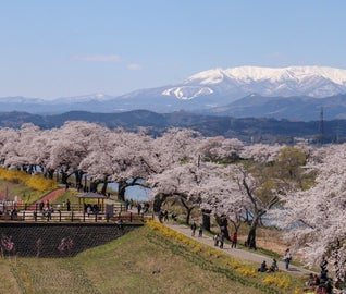 自然豊かな秋保温泉で、お花見と春のスイーツを満喫する旅
