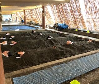 砂蒸し温泉に黒豚!指宿の魅力を発掘する旅