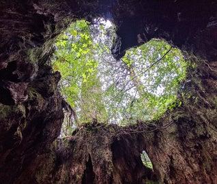 森の鼓動に耳を澄ます。世界遺産「屋久島」で自然の偉大さを体感する旅