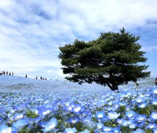西から東へ!山から海まで茨城を楽しむ旅
