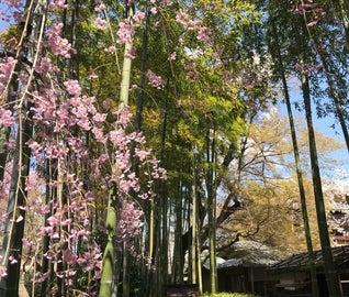 定番スポットはもう飽きた?ちょっと隠れたオススメを巡る、京都リフレッシュ旅行