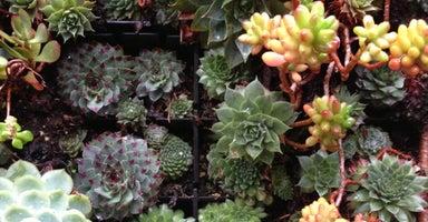 Flora Grubb Gardens