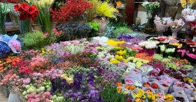 Hongqiao Bird and Flower Market (虹桥花鸟市场)