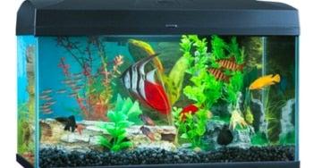 Aquarium Universe