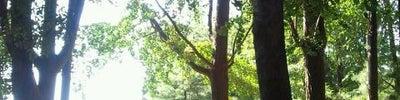 Namsan Park (남산공원)