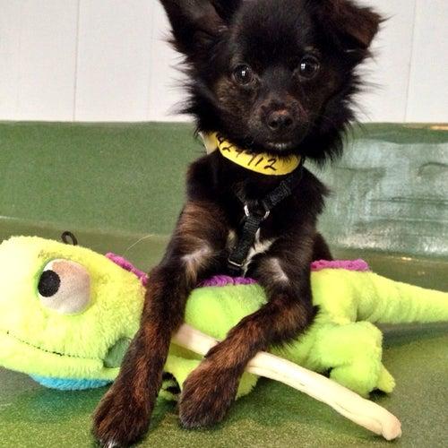 NKLA Pet Adoption Center