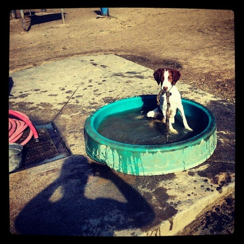 Silver Lake Dog Park