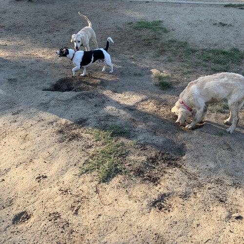 Westwoof Dog Park