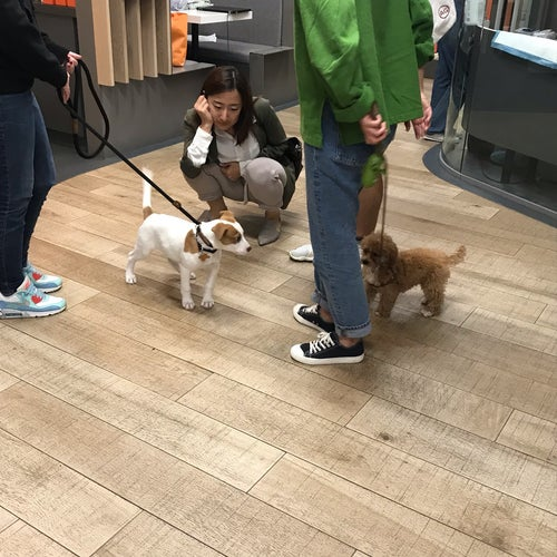 Best Friends Pet Adoption Center