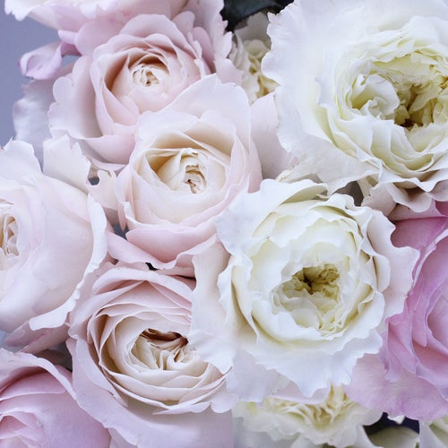 Rosa Rosa Flowers