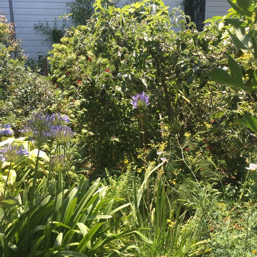 Howard Langton Community Garden