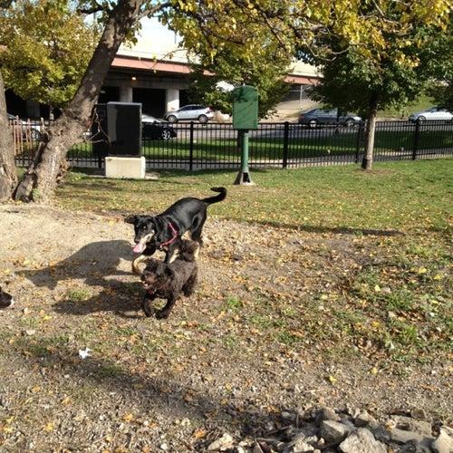 Logan Square Dog Park