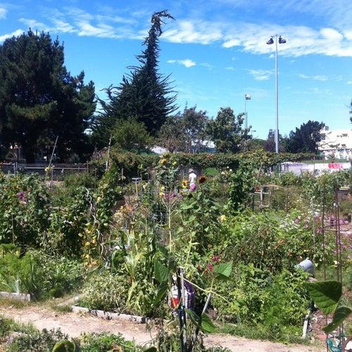 Potrero Del Sol Community Garden