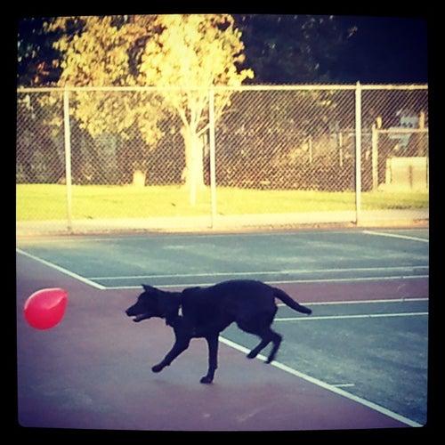 Welles Park Tennis Courts