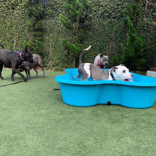 South LA Animal Shelter