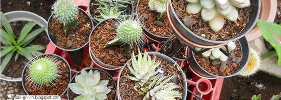 Putra Garden Tanaman Hias 2 Tips